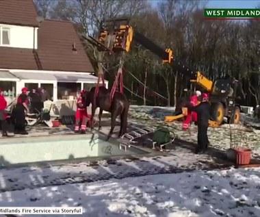 Nietypowa akcja ratunkowa. Wyciągali konia z pustego basenu