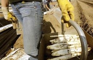 Niewolnicza praca Polek we Francji