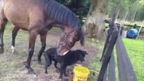 Niezwykła przyjaźń psa z... koniem!