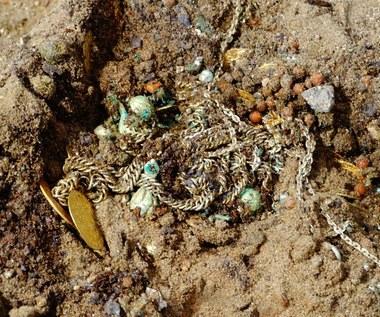 Niezwykłe odkrycie w bydgoskiej katedrze. Znaleziono 480 monet z XVI i XVII wieku