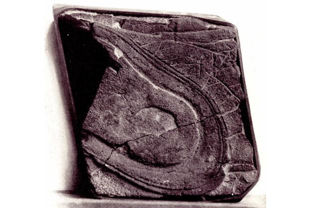 Niezwykły odcisk znaleziony w Newadzie. Może mieć nawet 248 mln lat. /materiały prasowe