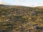 Norwegia: Ponad 300 reniferów zginęło od uderzeń piorunów
