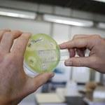 Nowa klasa antybiotyków odkryta w próbkach gleby