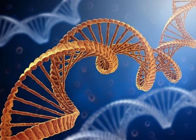 """Nowy lek częściowo """"naprawia"""" wadliwe geny, blokujące produkcje dystrofiny - białka, którego brak powoduje dystrofię mięśniową. /123RF/PICSEL"""