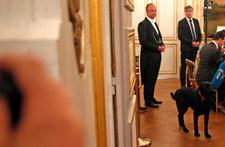 Nowy lokator w Pałacu Elizejskim - pies o imieniu Nemo