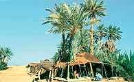 Oaza Zagora, Maroko /Encyklopedia Internautica