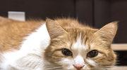 Objawy, które sygnalizują, że twój kot jest poważnie chory