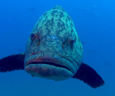 """""""Ocean przygód 3D"""" [trailer]"""