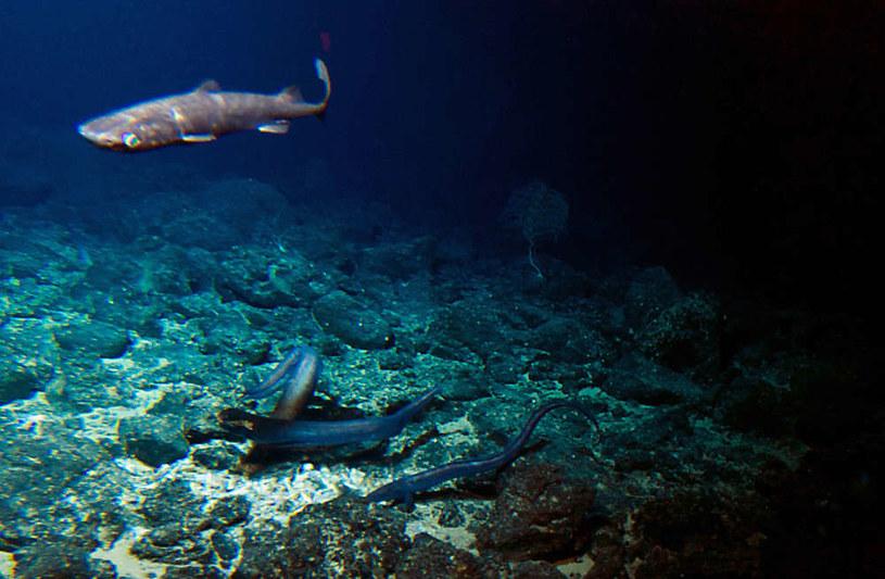Oceany tętnią życiem /materiały prasowe