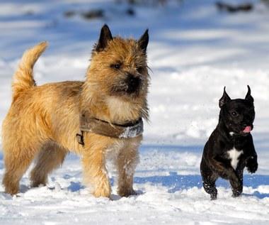 Ochrona psich łap