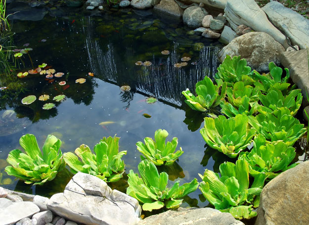 Oczko wodne jest piękną ozdobą ogrodu /materiały prasowe
