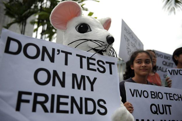 Od dziś w UE składniki kosmetyków nie mogą być testowane na zwierzętach /AFP