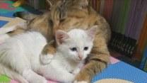 Od tych kotów można uczyć się czułości!