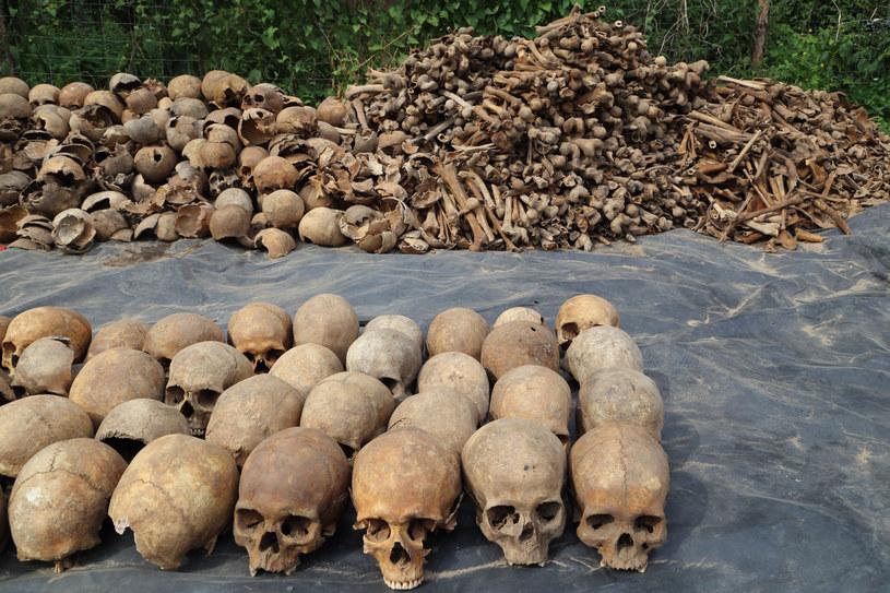Odkryte fragmenty kości i czaszki /Joanna Borowska /Agencja FORUM