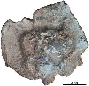 Odkryto najstarsze krokodyle jaja