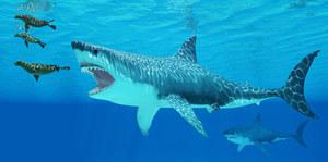 Odkryto nowy gatunek pradawnego rekina