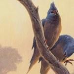 Odkryto ptaka sprzed 62 mln lat