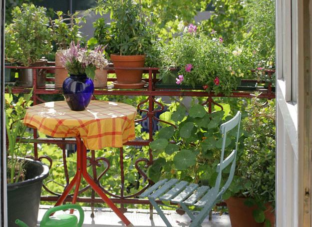 Odpowiednie kwiaty i aranżacja dodają balkonowi wyjątkowego uroku /©123RF/PICSEL