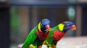 Odwiedź park ornitologiczny w Kuala Lumpur