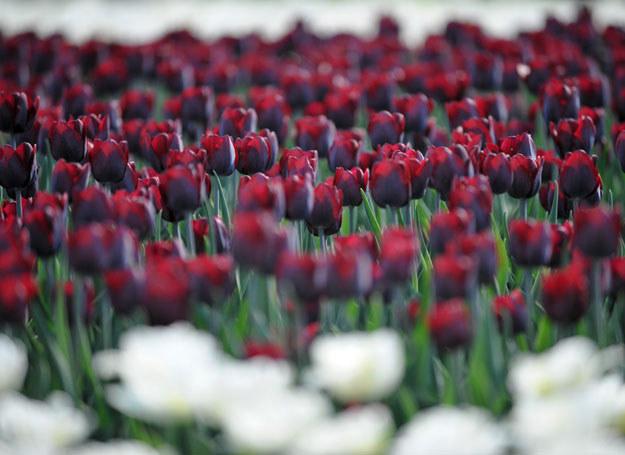 Ogród botaniczny Łódź /LUKASZ SZELAG/REPORTER /East News