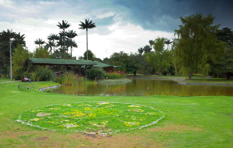 Ogród botaniczny w Bogocie /123RF/PICSEL