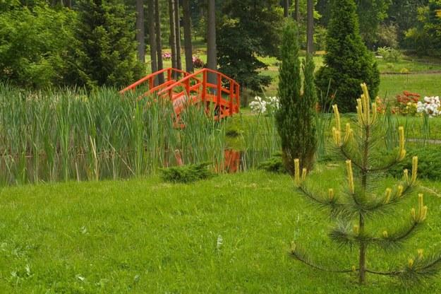 Ogród Dendrologiczny w Puszczy Bukowej/fot. Radosław Wasylkow /East News