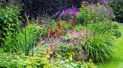 Ogród i balkon kwitnące od wiosny do jesieni