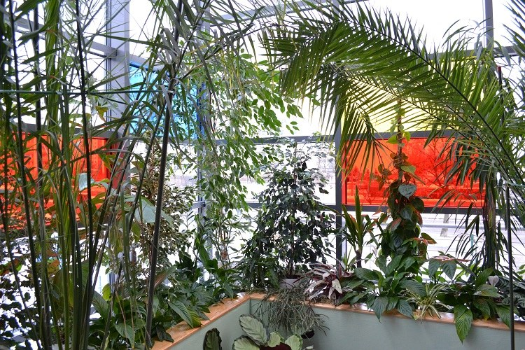 Ogród ma być dla chorych nowatorską formą terapii /Paweł Balinowski /RMF FM