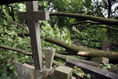 Ogromne zniszczenia na Powązkach po nawałnicach
