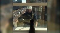 On mył szyby. Co robił wtedy kot?