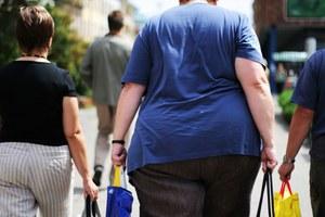 Osoby otyłe też są dobrymi dawcami komórek macierzystych