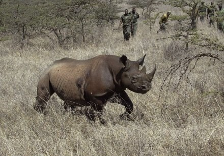 Ostatni czarny nosorożec zachodnioafrykański padł martwy w lipcu 2006 roku /AFP