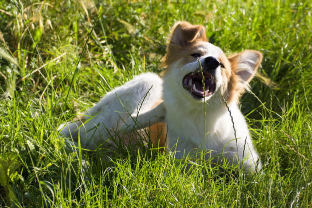 Otocz swojego zwierzaka troskliwą opieką /123/RF PICSEL