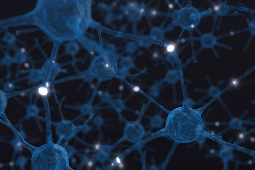 Otyłość osłabia połączenia w mózgu /123RF/PICSEL