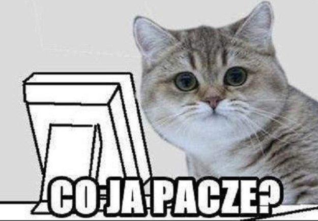 Paczący kot stał się wielką gwiazdą internetu /materiały prasowe