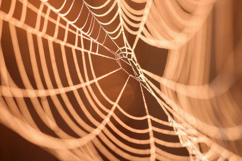 Pajęcza sieć z dodatkiem grafenu to przyszłość? /123RF/PICSEL