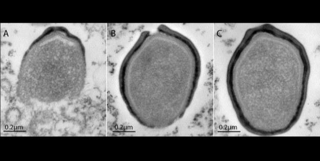 Pandorawirusy mogą występować na planetach pozasłonecznych? /materiały prasowe