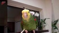 Papuga chciała się podrapać