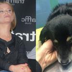 Paulina Młynarska wściekła. Jej pies został pogryziony!