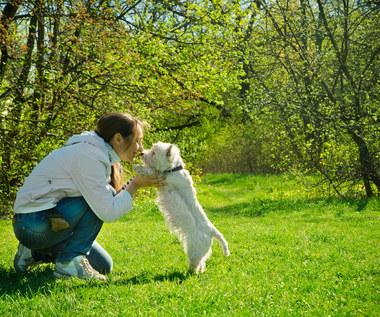 Pięć obowiązków właściciela psa