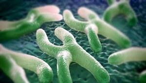 Pierwsza terapia genowa wydłużająca telomery. Czy czeka nas nieśmiertelność?