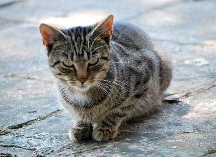Pierwsze dowody potwierdzające kontakty człowieka i kotów mają dziewięć i pół tysiąca lat