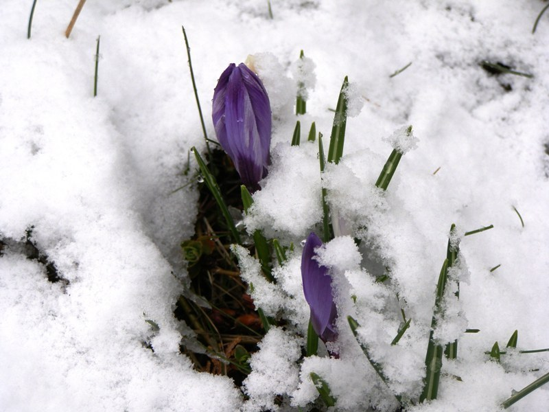 Pierwsze oznaki wiosny w Tarnowskich Górach  /Kamotf, słuchacz RMF FM /RMF FM