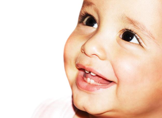 Pierwsze pojawiają się około 6. miesiąca życia dziecka. Ostatnie – przed ukończeniem 3. roku. /123RF/PICSEL
