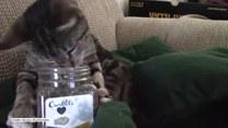 Pierwszy kontakt kotki z kocimiętką