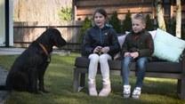 Pies asystujący. Co należy do obowiązków czworonoga?