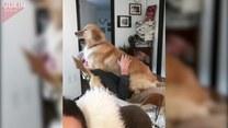 Pies chciał mu usiąść na kolanach, ale...
