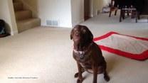 Pies i wielka kość, czyli radość w czystym wydaniu