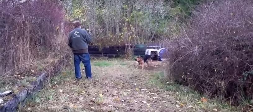 Pies jest agresywny i nie pozwala do siebie podejść /Enjoypeople /YouTube