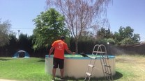 Pies kochający kąpiele w basenie